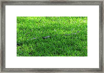 On The Move Framed Print by Cynthia Guinn