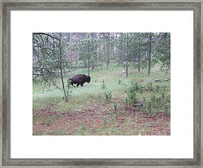 On The Move Framed Print by Dennis Wilkins