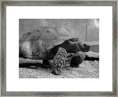 On The Move Framed Print by LeeAnn Alexander