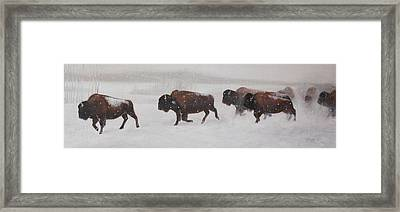 On The Move Framed Print by Tammy  Taylor