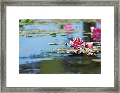 Framed Print featuring the photograph On The Pond by Amee Cave
