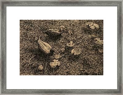 On The Pond Framed Print