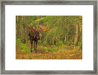 On The Prowl Abstract Framed Print
