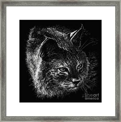On The Prowl- Bobcat Framed Print by Laurie Musser