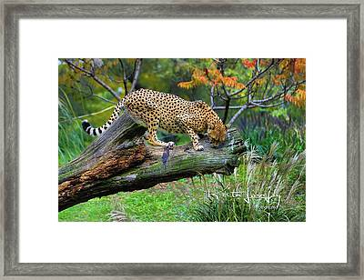 On The Prowl Framed Print by Keith Lovejoy
