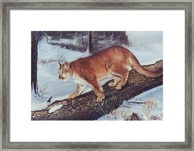 On The Prowl Framed Print by Lynne Parker
