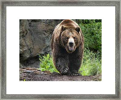 On The Prowl Framed Print by Melody Watson
