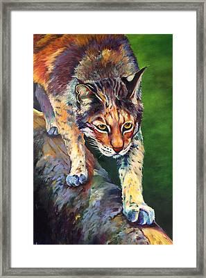 On The Prowl Framed Print by Robert Pankey