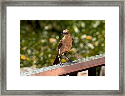 On The Rail Framed Print by Christopher Holmes
