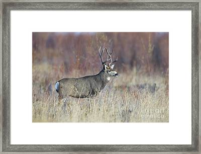 On The River Bank Framed Print