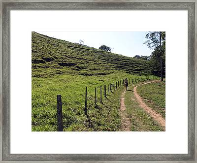 On The Road Framed Print by Carlos Alvim