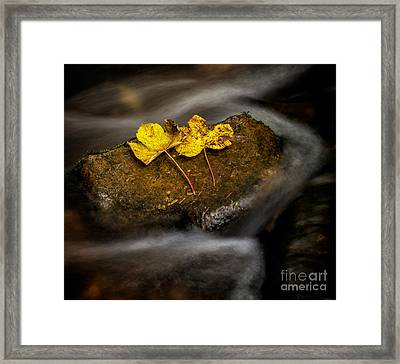 On The Rocks Framed Print by Adrian Evans
