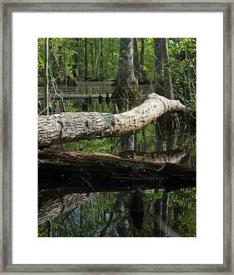 On The Swamp Framed Print by Alan Raasch