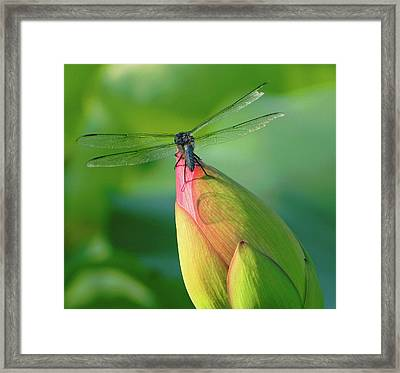 On The Tip Of My World Framed Print
