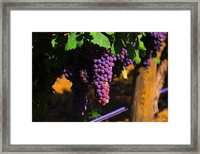 On The Vine Framed Print
