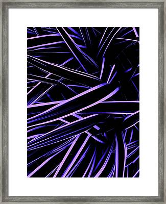 On The Walk Framed Print