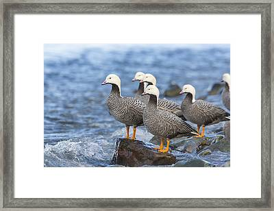 On The Waters Edge Framed Print by Tim Grams