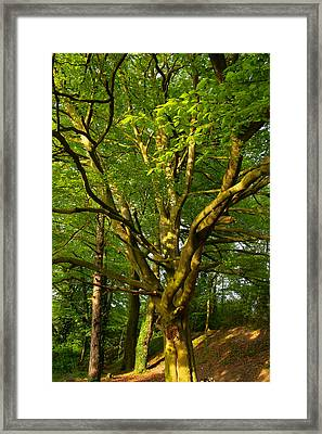 On The Way To St. Catherine's Hill Framed Print by Joshua Ackerman