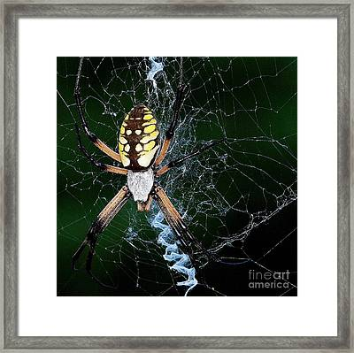 On The Web Framed Print by Mickey Harkins