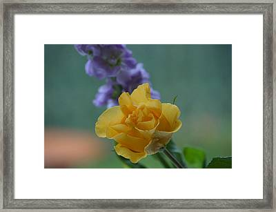 On The Window Sill. Framed Print