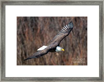 On The Wings Framed Print