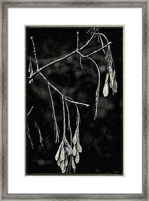 On The Wings Of A Maple - Black And White Framed Print by Mother Nature