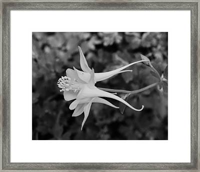 On The Wings Framed Print by Tom Druin