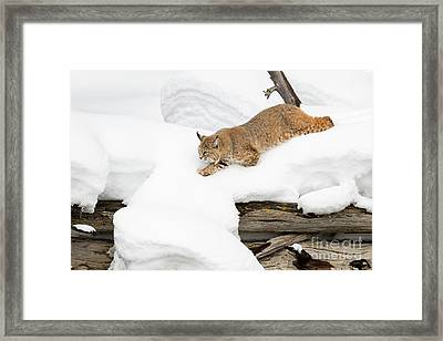 On Top Framed Print by Aaron Whittemore