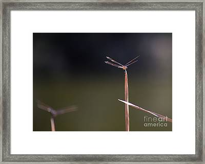 On Top Of The World By Darrell Hutto Framed Print by J Darrell Hutto