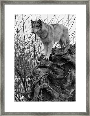 Framed Print featuring the photograph On Top by Shari Jardina