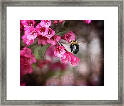 On Wine And Roses Weigela - 2 Framed Print by Debra Martz