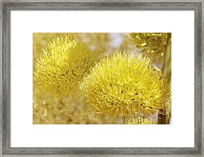 Once In A Lifetime Framed Print by Christine Till