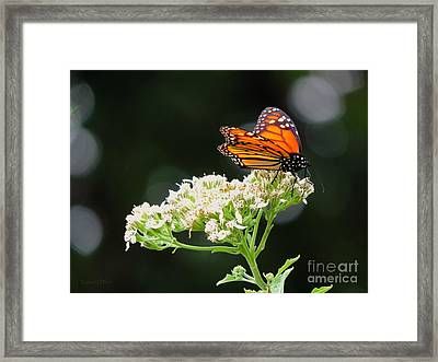 Once Upon A Butterfly 005 Framed Print