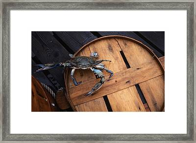 One Angry Crab Framed Print