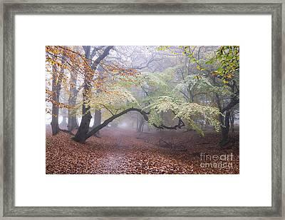 One Autumn Morning  Framed Print