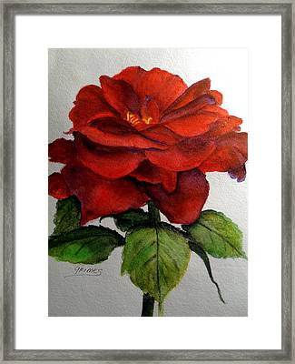 One Beautiful Rose Framed Print