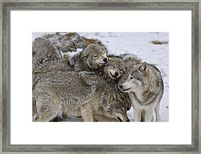 Framed Print featuring the photograph One Big Happy Family by Michael Cummings