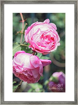 Framed Print featuring the photograph One Bold, One Bashful by Linda Lees