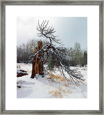 Framed Print featuring the photograph One Branch Left by Shane Bechler