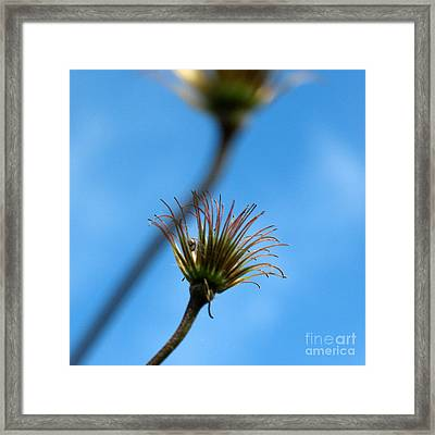 Framed Print featuring the photograph One Bubble by Jacqi Elmslie