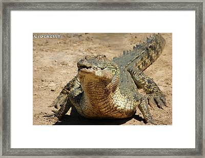 One Crazy Saltwater Crocodile Framed Print