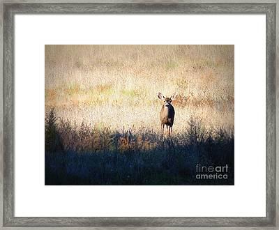 One Cute Deer Framed Print