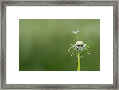 One Dandy Framed Print by Bess Hamiti