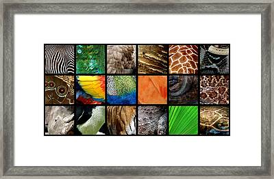 One Day At The Zoo Ll Framed Print