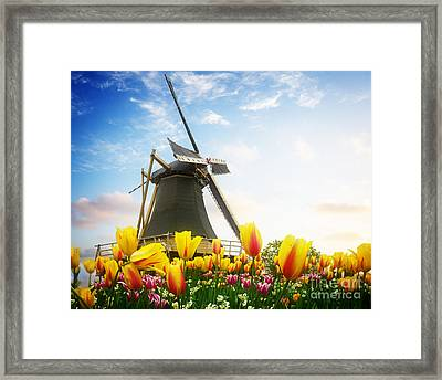 One Dutch Windmill Over  Tulips Framed Print