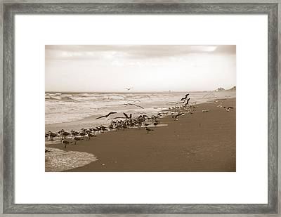 One Flap Of A Seagull Framed Print