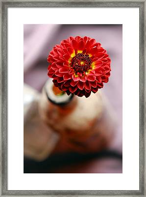 One Flower In Old Bottle Framed Print by Laura Mountainspring