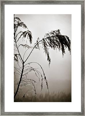 One Foggy Morning Framed Print by Carolyn Marshall