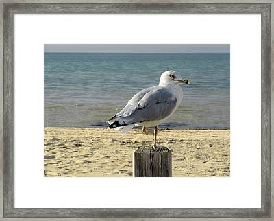 One Footed Seagull Framed Print