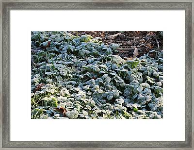 One Frosty Morning Framed Print by Sergey Nassyrov